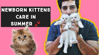 Newborn Kittens Care in Summer   How to take care of Newborn Kittens Mother cat care   persian cat