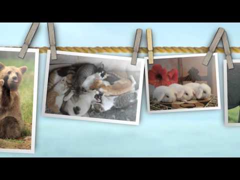 Compilation di animali: i cuccioli più teneri e divertenti