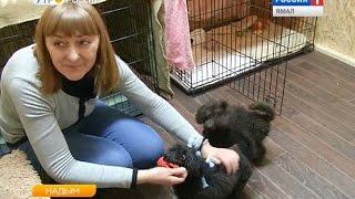 Постояльцы первой гостиницы для животных в Надыме условиями довольны!