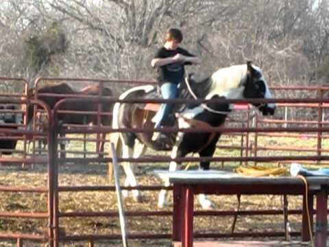 My Son Dakota Riding My Horse Joe