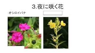 中学入試によく出る、夏の植物についての説明。