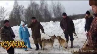 Мл. гр. ЗСЛ Солнечногорская зимняя выставка