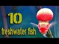 10 freshwater ornamental fish for aquarium