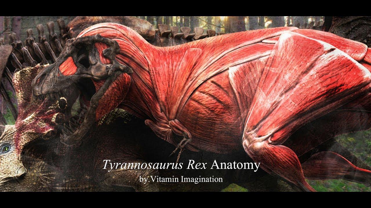 Tyrannosaurus anatomy by. Vitamin Imagination - YouTube