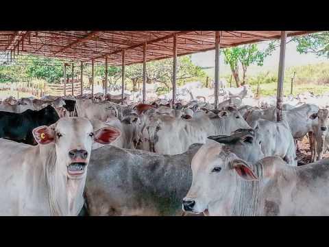 DBO de fevereiro mostra a revolução na pecuária rondoniense