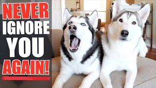 Train Your Siberian Husky TO ALWAYS LISTEN TO YOUR COMMANDS! (How To Teach A Dog TO FOCUS!)