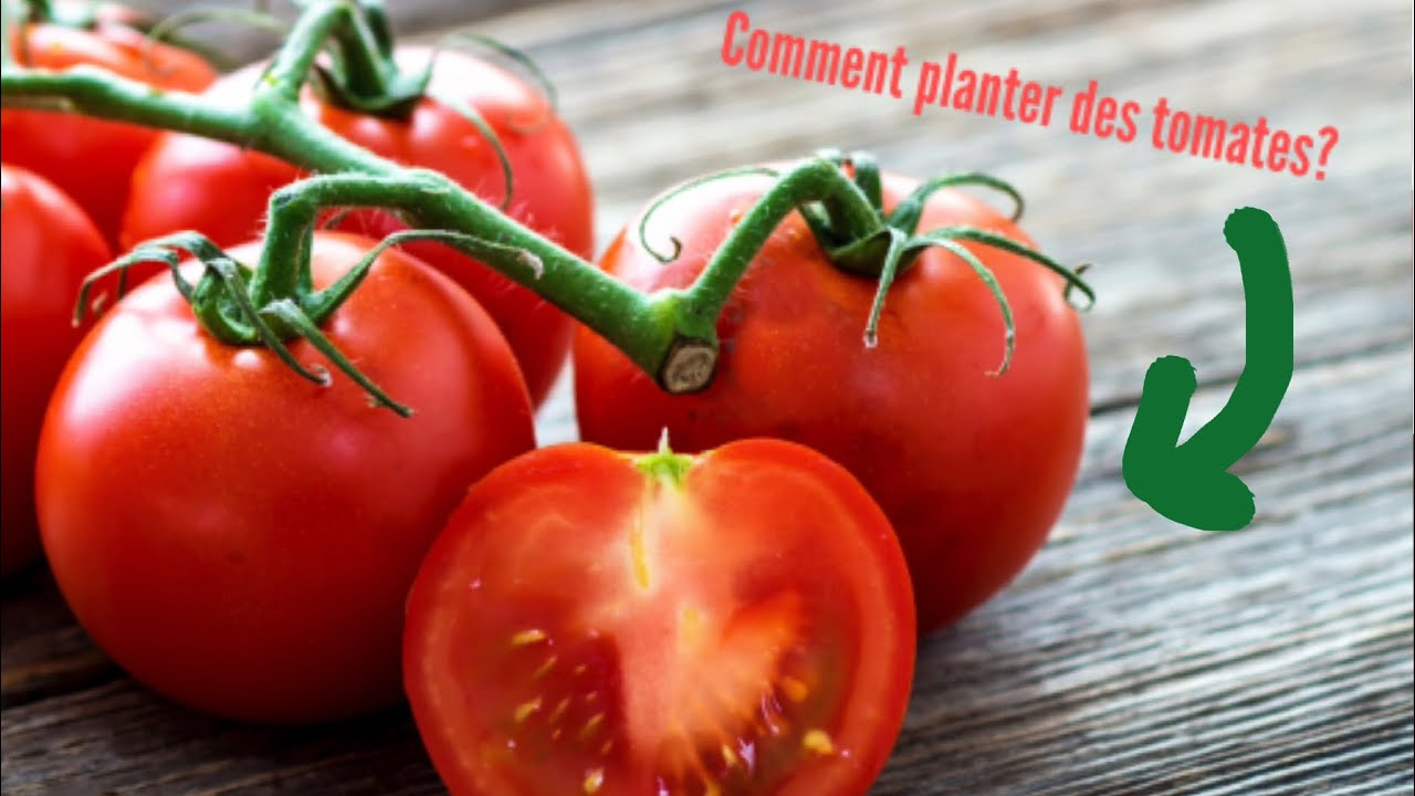 Comment planter des tomates? - YouTube
