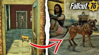 Fallout 76 | HOW TO GET A PET DOG IN YOUR BASE! (Fallout 76 Secrets)