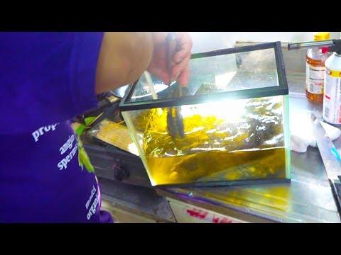 深海魚をオリーブオイル水槽で泳がす