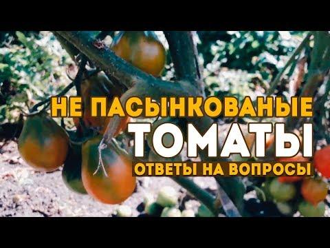 Не пасынкованые томаты! Ответы на вопросы подписчиков