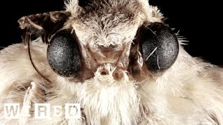 How Moth Eyes Inspired The Camera Lens | Think Like A Tree