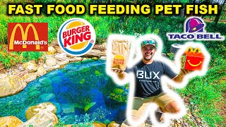 HAND-FEEDING My BACKYARD Mini Pond PET Fish FAST FOOD!!! (Explosive Eating)