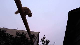 СОЛНЫШКО на газовой трубе Brave cat named Sunny is on the gas pipe №2