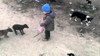 Андрюха кормит бездомных собак