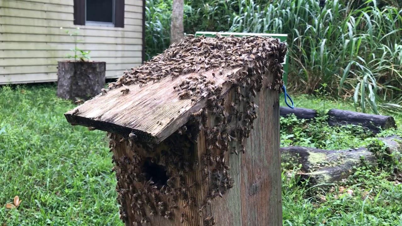 Bee The Change - Bird Box Rescue