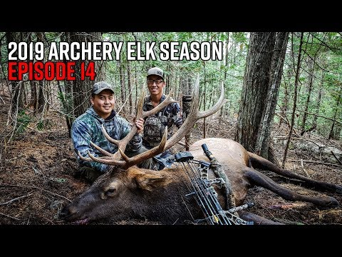 Calling In A Public Land Bull! - Washington Archery Elk Hunt | 2019 Hunting Season EP.14