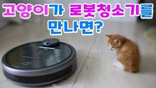 로봇청소기(다이나킹 R7)를 고양이가 만나면? (로봇청…