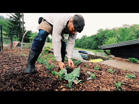 15 Quick WINS I use Everyday to Grow My Own Food