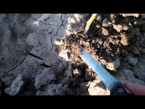 Вопрос: Что важно знать при выращивании спаржи?