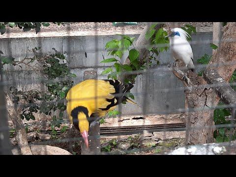 Merdunya Suara Berbagai Macam Burung Dalam Kandang Koloni.