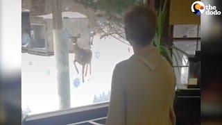 Smart Wild Deer Copies Woman