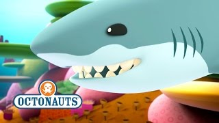 octonauts peso is chased by a great white shark