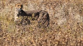 Zwierzęta Afryki cz II