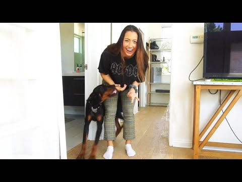 Kristina Kage - YouTuber Won't Be Charged After Hitting Her Dog