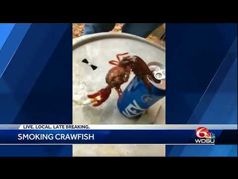 Crawfish Hanging On Beer Can With Cigarette Goes Viral