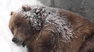 Hibernation video
