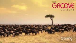 The Groove Gallery: Spring African Safari