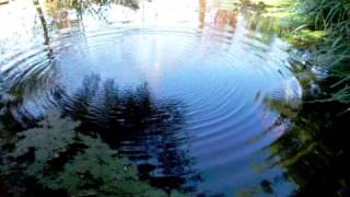 Ripples_on_pond.mov
