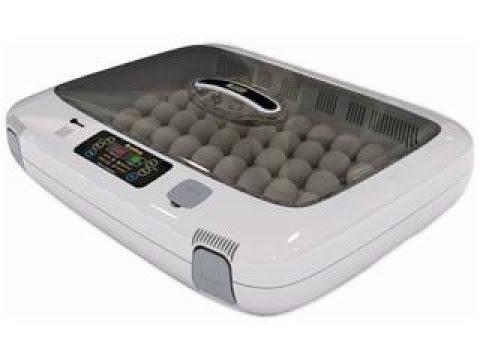 Инкубация куриных яиц в домашних условиях. Часть 1.