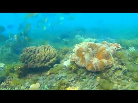 Great Barrier Reef Cam