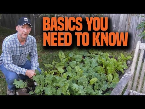 How to plant your fall vegetable garden in Florida