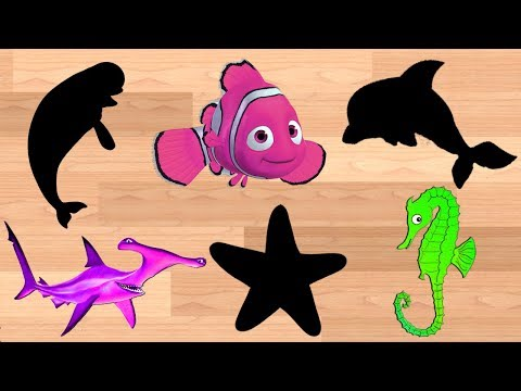 Learn Colors With Sea Animals Shadow Images || Cartoon Video For Children thumbnail