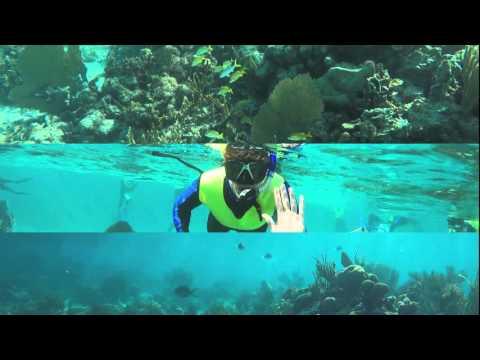 Marine Biology 2016