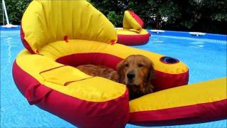 Check This Out!!  Golden Retriever Dogs In Pool!!  Too Funny!!