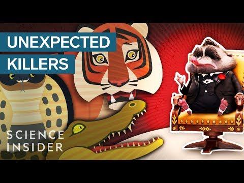5 Animals You Wouldn't Suspect Are Actually Fearsome Predators