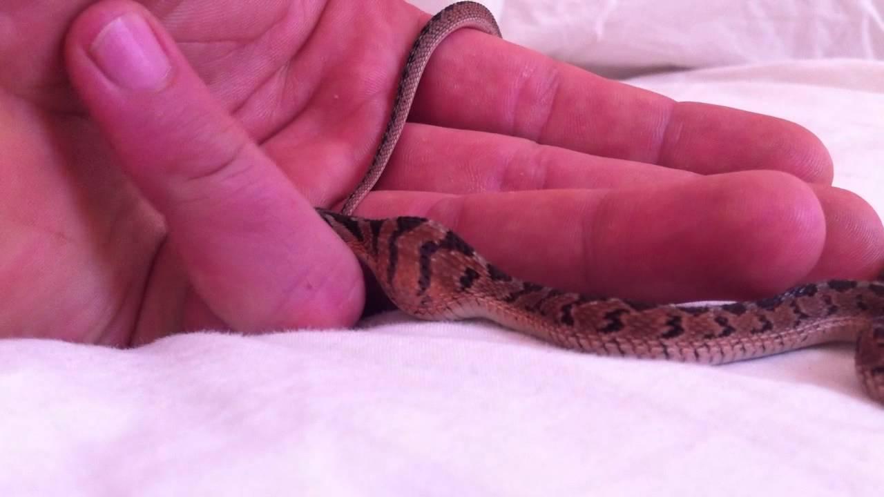 What Snake Eats