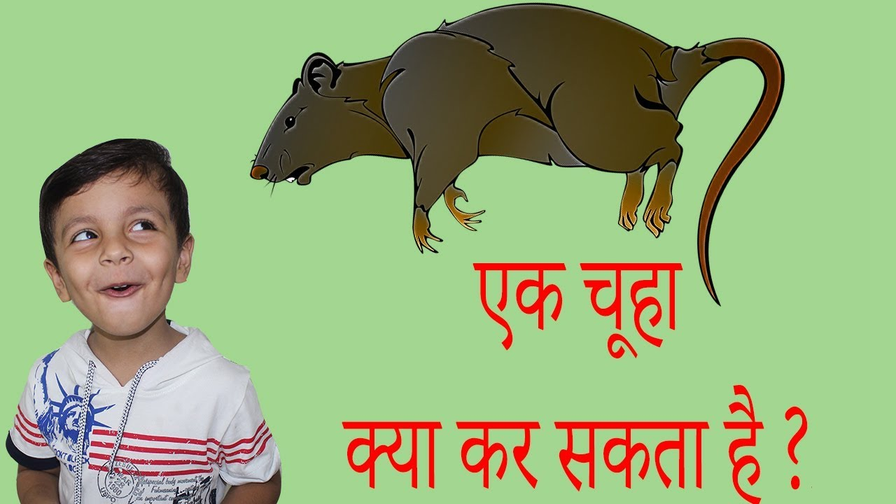 TOP 10 FACTS ABOUT RATS | Indian Funny Videos | Hindi Videos for kids | Aayu and Pihu Show
