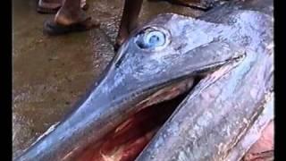 Рыбный рынок на Шри-Ланке