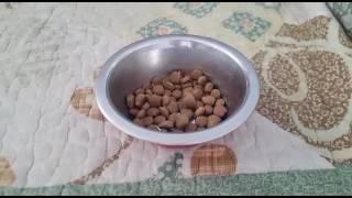Как перевести собаку на новый корм? Кристина&Марчик/здоровье
