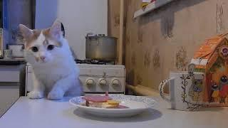Кот, еда на столе и скрытая камера