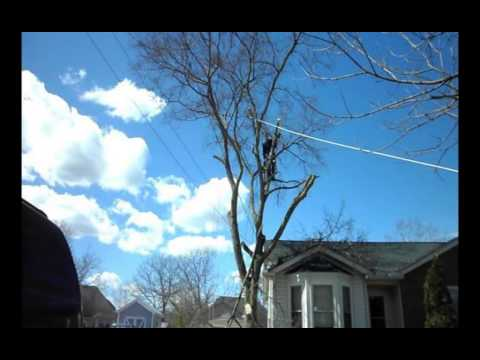 High Sd Tree Removal Time Lapse