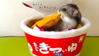 動画撮影日:2016年09月11日 小さなころから大好きなマルちゃんの「赤い...