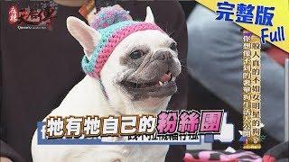 【完整版】一般人真的不如女明星的狗?你想像不到的奢華狗生活大公開!2018.02.01《麻辣天后傳》