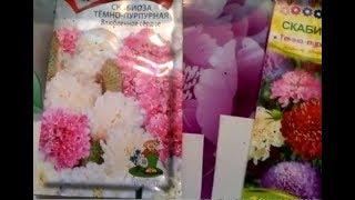 Нежный цветок - Скабиоза. Сеем рассаду...