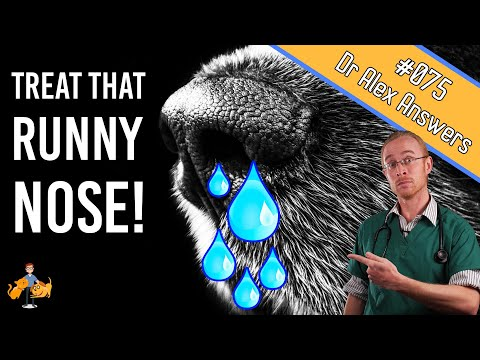 Runny Nose Causes and Home Allergy Treatment - Dog Care Vet Advice