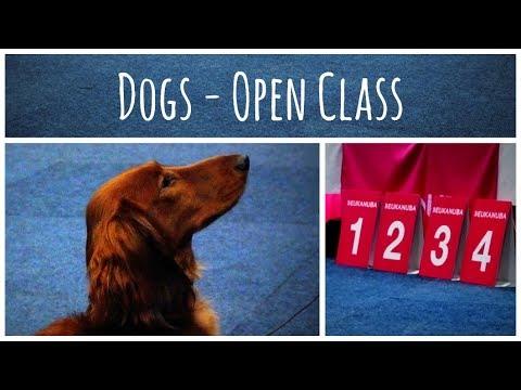 World Dog Show 2017 | Standard Dachshund long-haired (Dogs - Open Class)